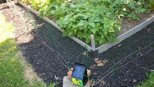 solar electric fence protecting garden plants